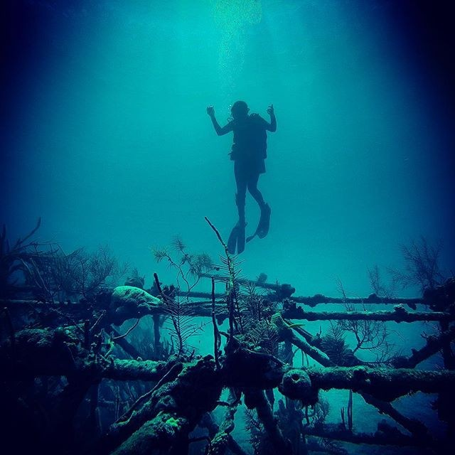 "Scuba diving, The LCT Barge or ""Thunderball"" Wreck, Nassau Paradise Island, The Bahamas"