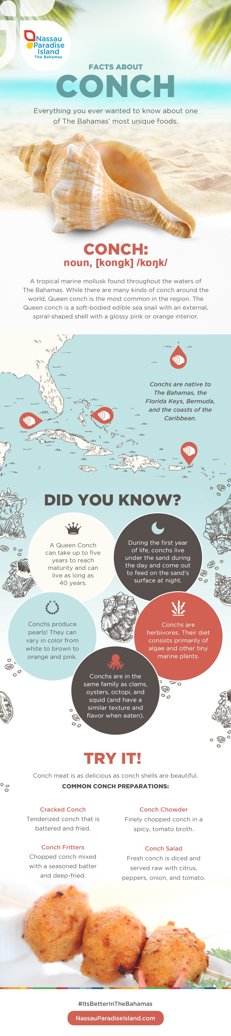 Infographic: Facts About Conch