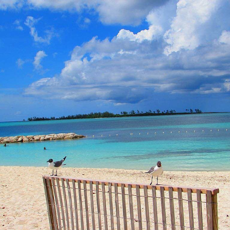 Sea birds, turquoise water, and white sand at Saunders Beach in The Bahamas.