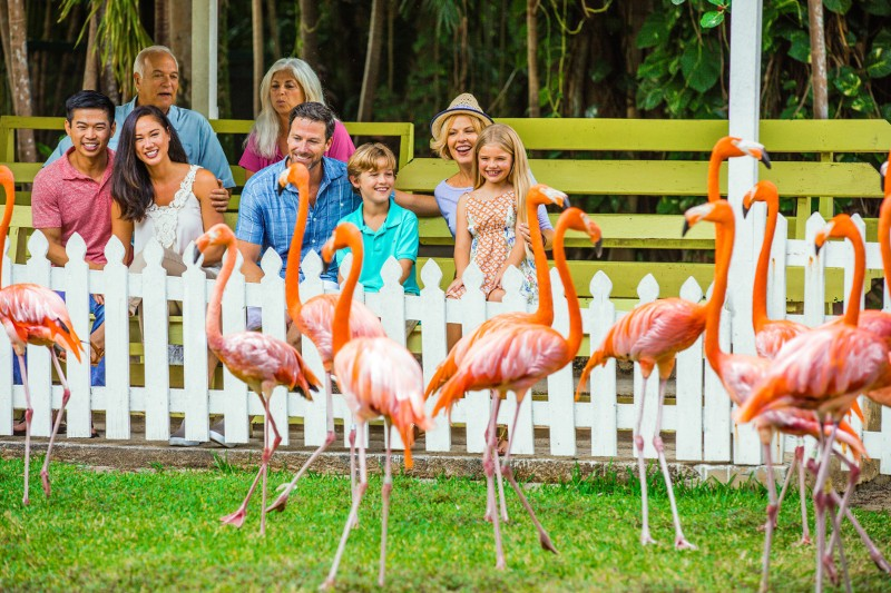 Ardastra Gardens & Zoo is a family-friendly outing in Nassau Paradise Island