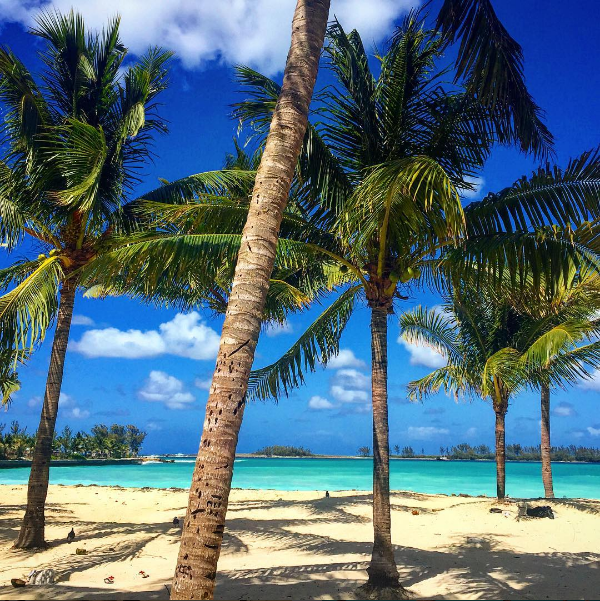 Tropical palm trees on the beach in The Bahamas.