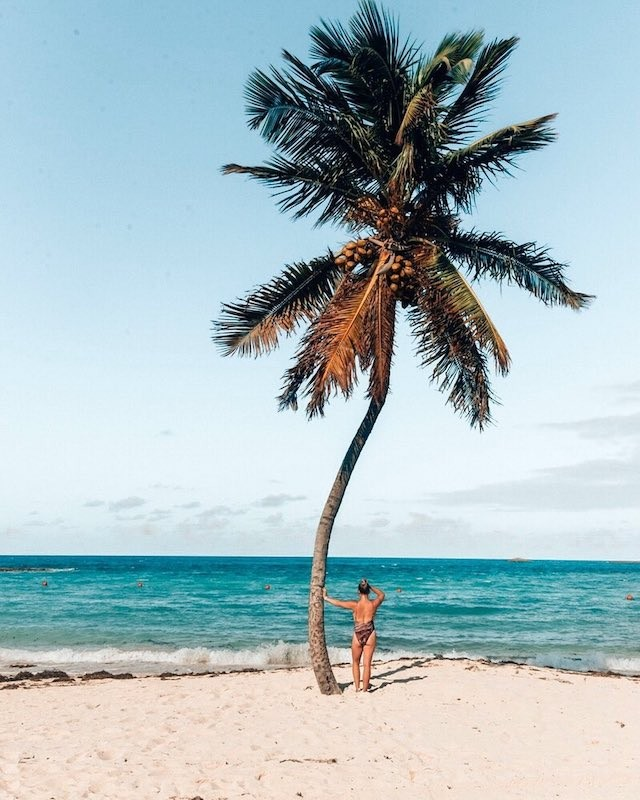 A woman leans against a palm tree and looks out to sea.