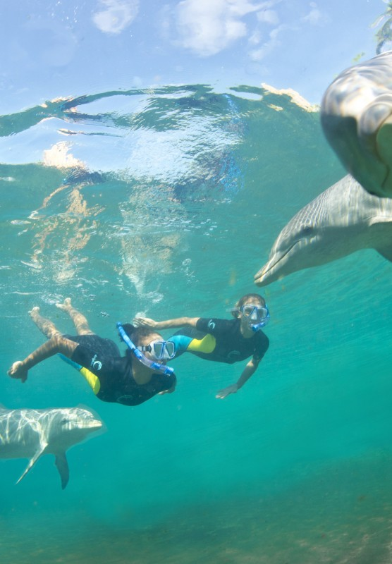 Swimming with dolphins at Atlantis, Paradise Island