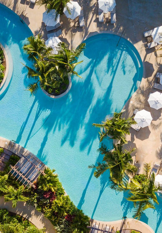 Aerial shot of beautiful pool surrounded by palm trees