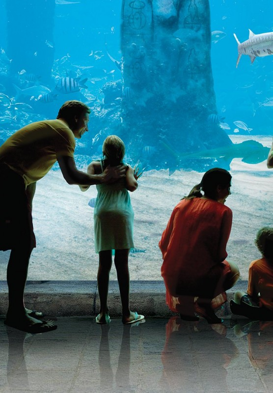 A family of five peering through the glass of an aquarium.