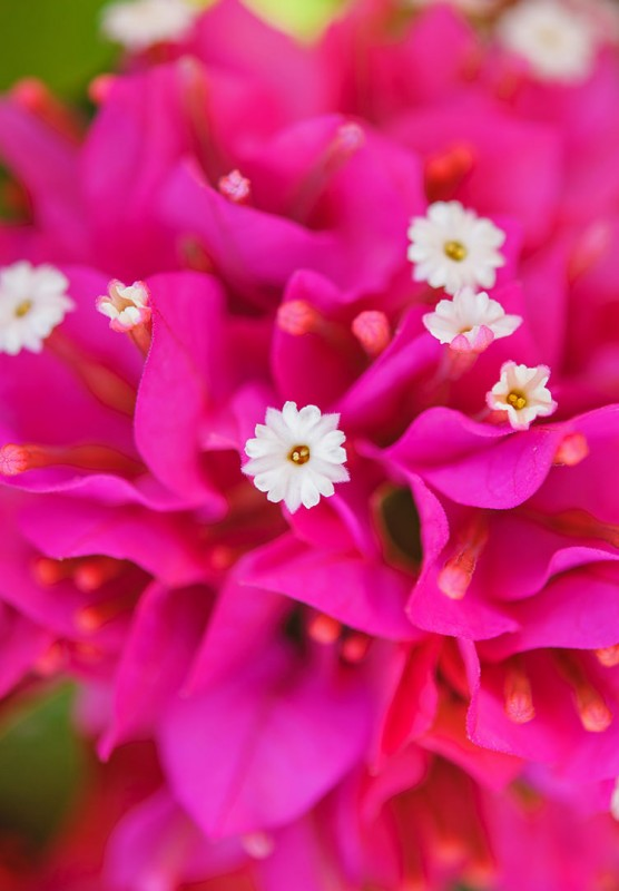 Close up photo of a beautiful pink flower