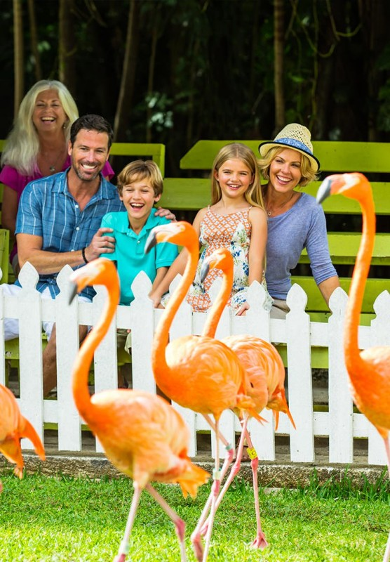 A large group of people smiling and laughing at flamingos.