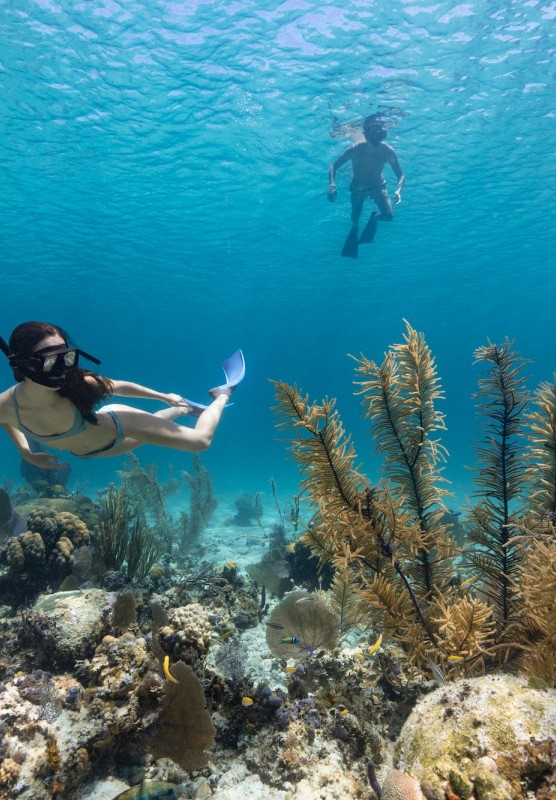 Best Reefs For Snorkeling In Nassau Paradise Island