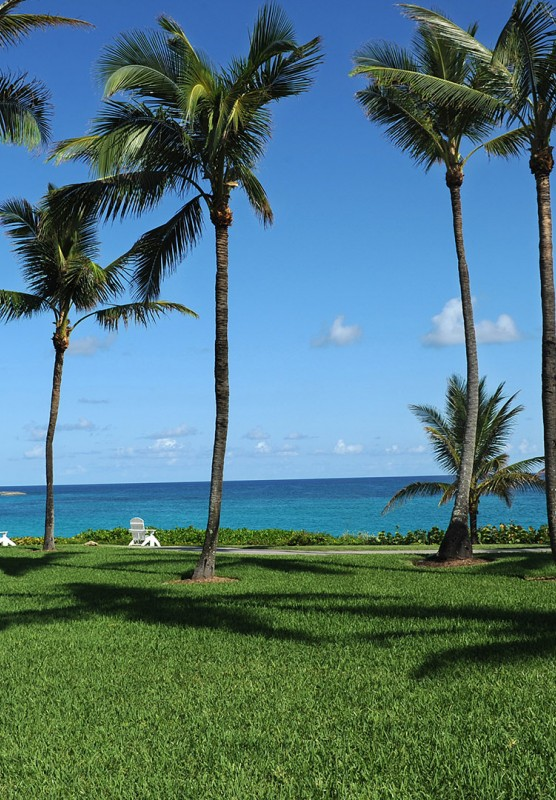 Palm trees staggered across a lush green lawn.
