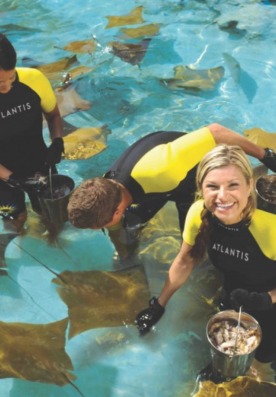 People swimming with sting rays