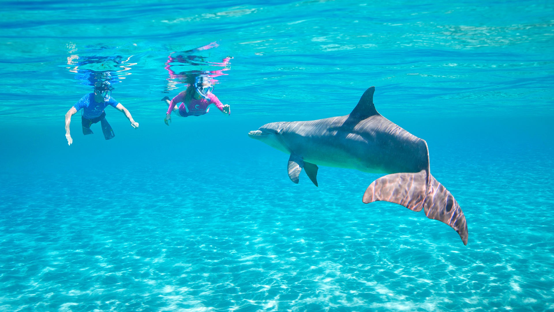 Two People Snorkelling Above A Dolphin