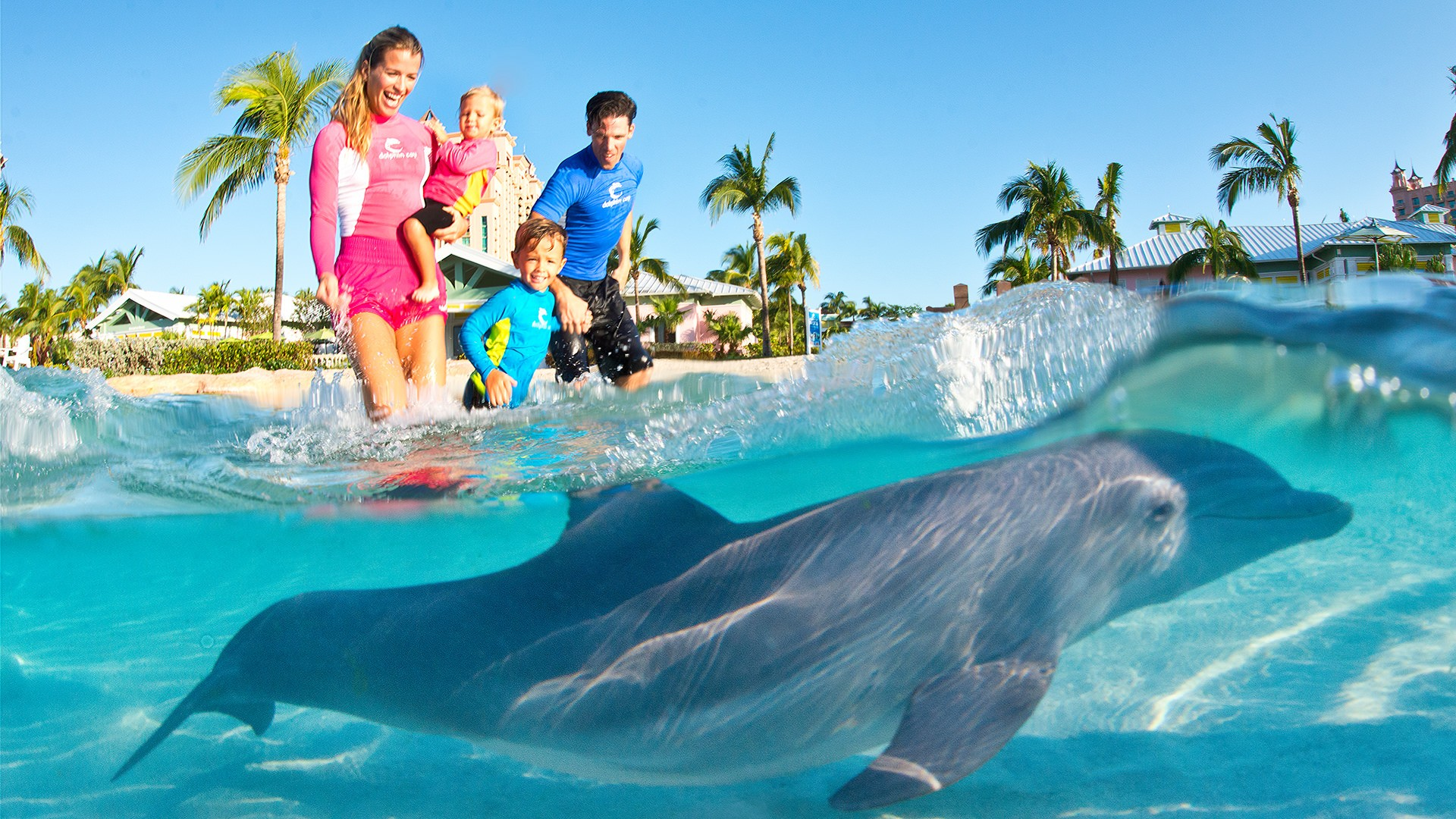 A Family Of Four Walk Through Ocean Waters Towards Dolphin